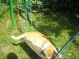 Кот на качеле